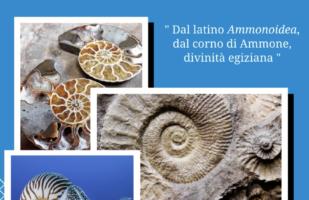 Il mollusco più antico del mondo!