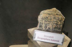 Le prime tracce di vita sulla Terra: le Stromatoliti